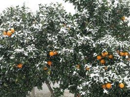 Fruto que suporta a crise